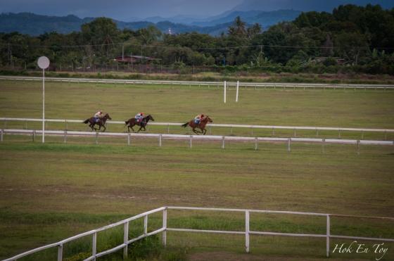 Kuda ku lari gagah berani