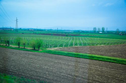 Vineyard sepajang perjalanan