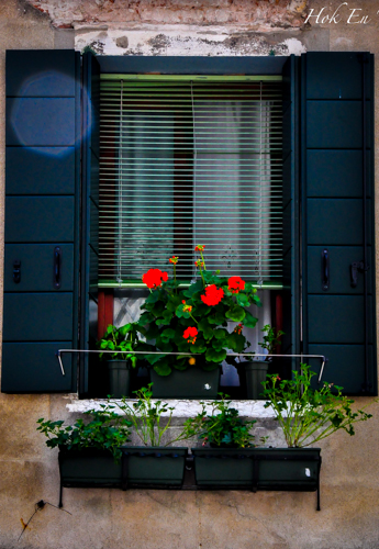 Setiap rumah mesti ada planter box kat tingkap. Bunga-bunga mekar sejuk mata memandang. Kat kl ada planter box je.