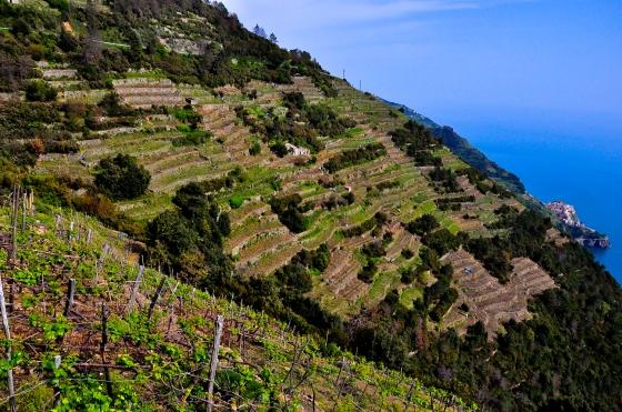 Cerun-cerun vineyard. Kami bermula dari hujung tu