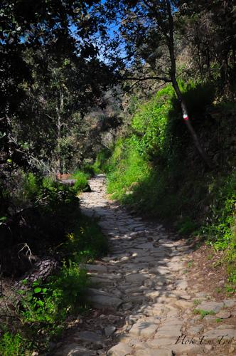 Ni salah satu trail kat dalam hutan