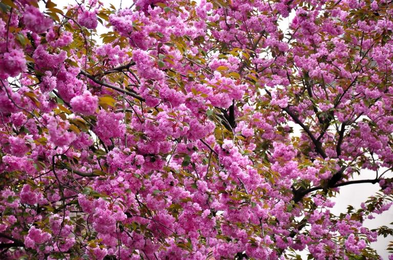 Bunga-bunga cinta kata nya