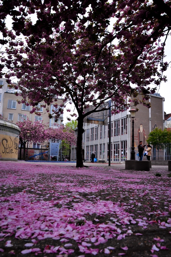 Spring season. Salah satu kawasan cantik yang kami jumpa semasa jalan kaki dari bus stop ke waterlooplein kami