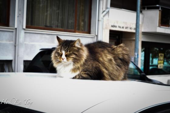 Debab-debab kucing jalanan kat sini. Kat sini kucing jalanan tak kebuluran yek. Merata-rata derang letak makanan kucing. Ada satu tempat tu memang derang buat rumah kucing dekat park & playground. Makanan kucing cap black wood yek tuan-tuan & puan-puan. Bukan cap giant buy 3 free 1 ke apa ke.